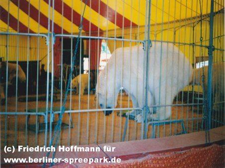 spreepark-eisbaer-circus-piccadilly