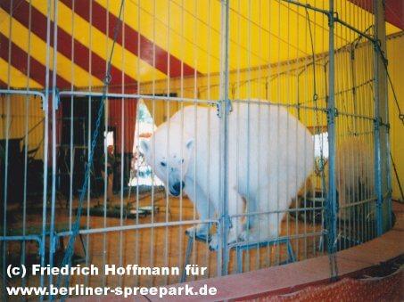 spreepark-zirkus-eisbaeren-piccadilly