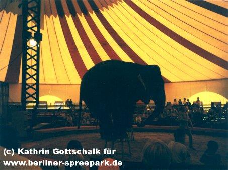 spreepark-zirkus-tiere-elefant